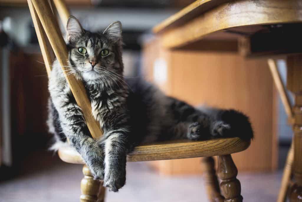 ペットシッターで猫を飼おう!